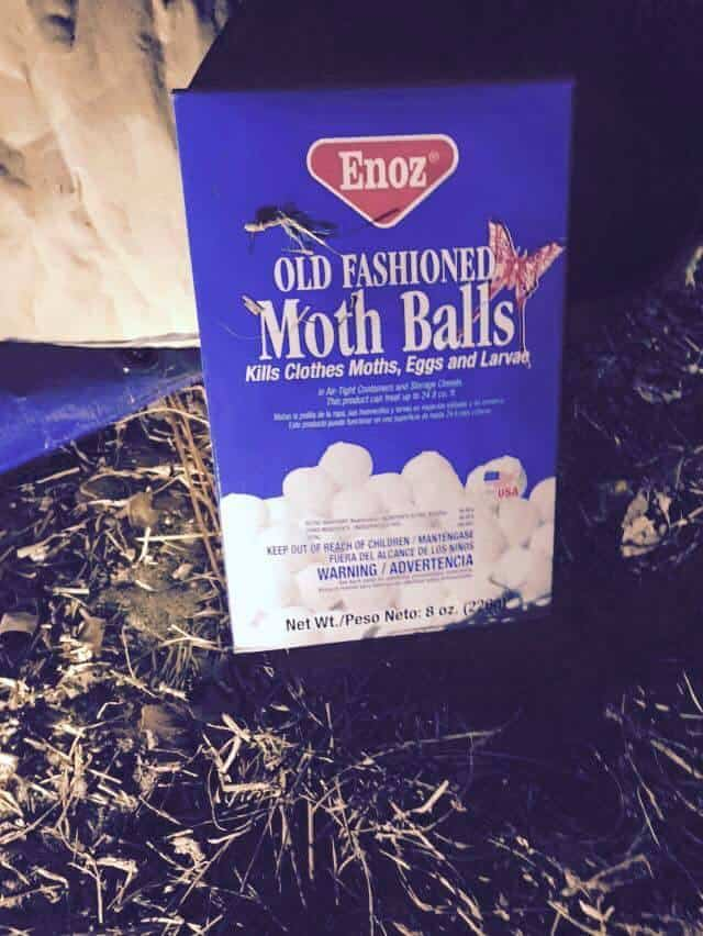 Knoxville pest control, Maryville pest control, moth balls,