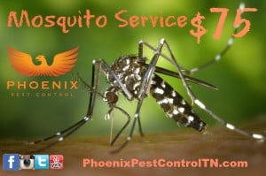 Knoxville pest control, Maryville pest control, mosquito service, coupon