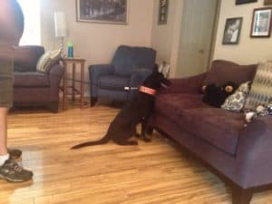 knoxville pest control, bed bugs, canine scent detection