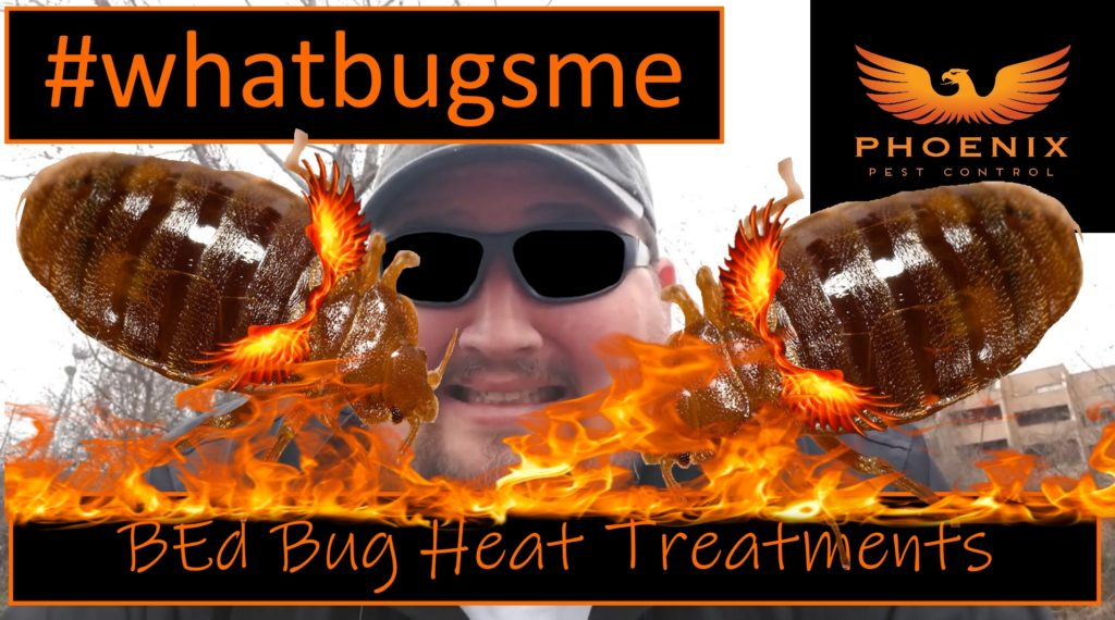Phoenix Pest Control Bed Bug Heat Thumbnail